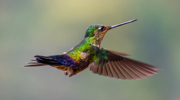 Miért kolibri?
