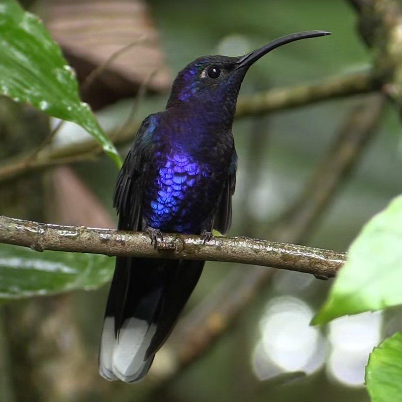 kolibrilink-2